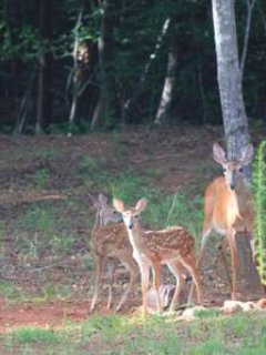 Late June and July you can see new fawns visiting our feeder