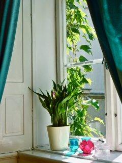all bedrooms overlooking quiet private garden. No noise, unusual in Old Town