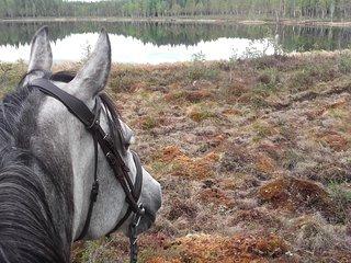 Nos chevaux nous permettent de partir en promenade quotidiennement
