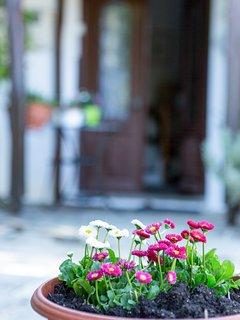 Enjoy the lush garden