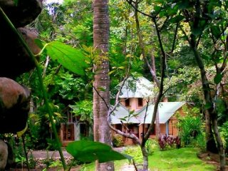 JUNGLE DREAM!   La Casa de La Canela