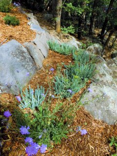 Native gardens attract lots of butterflies to the property.