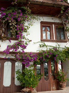Bouganvillea clad old buildings in the old town of Kalkan