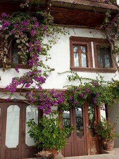 Bouganvillea clad old buildings in the old town of Kalkan