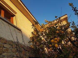 Los huéspedes pueden disfrutar la fruta de 'Las Hazas': naranja, cereza, manzana, pera, higo, kiwi