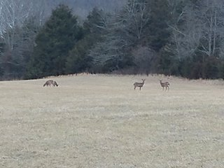 meadow at the cabin,lots of wildlife