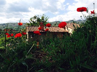Lovely accommodation in a typical tuscan farmhouse. Last minute Offer Sept.