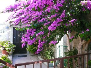 Holiday Room Bougainvillea