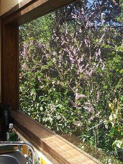 Una vista desde la ventana de la cocina.