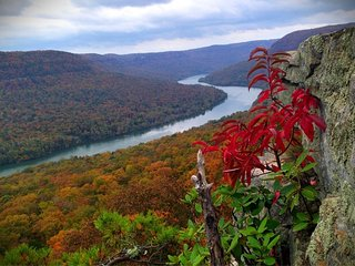 Tennessee River Gorge Island CabinsR #3  17 mi. Chatt. 'Stay 3 nights 4th Free'.