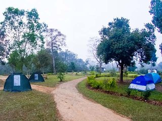 Coffee Plantation stay, Camp site - Couple sharing tent