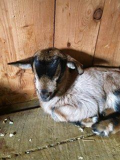 Newborn buckling