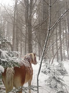 our woods during a blizzard.