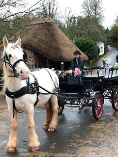 Horse and carriage rides available