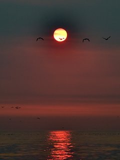 Seagulls at Sunset - Picture of perfection! What will you see as the sunsets?
