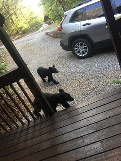 Cubs on our porch