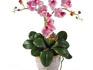 Orchidea Bilocale 1 bedroom and sofa-bed