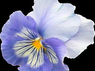 Viola bilocale 1 bedroom amd sofa-bed