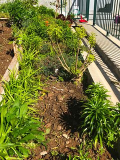 Vegetable garden (First floor)