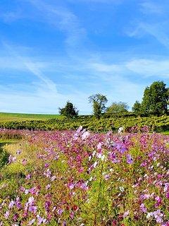 paysage de vignes et fleurs autour de la propriété