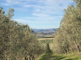 Weingut und Agriturismo La Pizzuta del Principe - auf der Weinstrasse Kalabriens