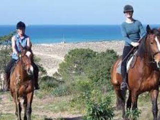 Pine trees Riding Stables