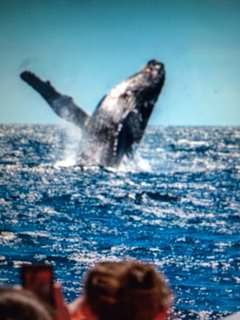 Take a whale watching trip out of Boothbay Harbor