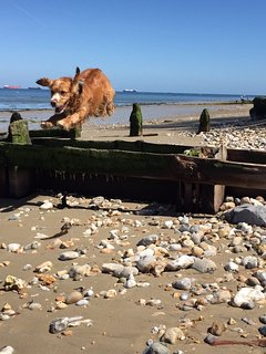 feel the joy in Bembridge at our local beach