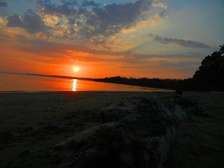 El Roble de Puerta Valverde,  Ama, vive y suena en contacto con el sol y el mar