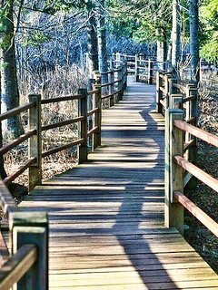Extensive trails let you explore Gooseberry Falls Park, this boardwalk section runs along the river