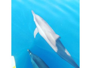day tour in mdf beach resort dolphin watching