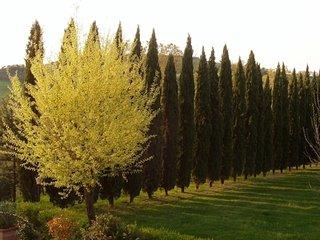 Stonehouse Valdorcia Tuscany