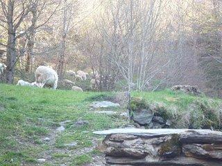 gite romantique a la montagne - calme, nature et moutons