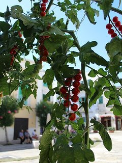 Tomatoes on the vine in Piazza Garibaldi, barely 2 minutes from the apartment