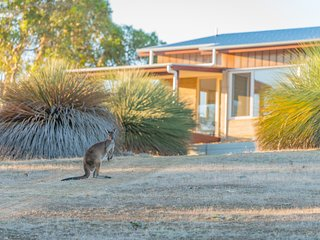 The Villa - luxury with local Kangaroos at your doorstep