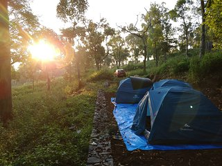 Tents Camp Site in the Coffee Estate! Kodaikanal