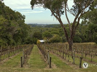 Myers Road Vineyard - Spectacular Rural Setting with Bay Views!