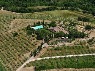 Posizione Panoramica con vigna e oliveto
