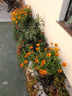 Patio Flowers