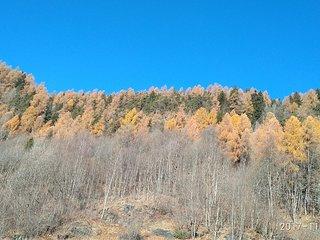 Appartamento Stella Alpina nel bosco