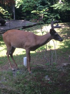 Some friends that you might see in our front yard at Treetop-Retreat.