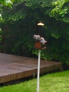 One of our squirrel's favorite places, until the squirrel 'cone-of-shame' was installed!