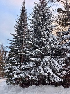 Winter wonderland at Treetop-Retreat.
