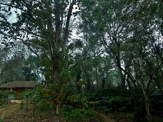 Thennal Jungle Traditional Cottage (Room 9)