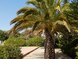 Monte-Bougainvillea CRAVOS - holiday apartment, car included!