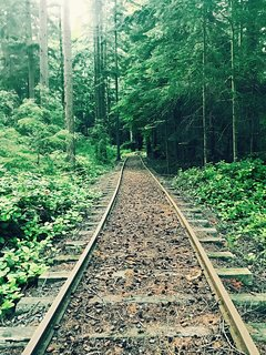 Train tracks going into the woods