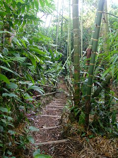 Ecological path with bamboo and a beautiful creek.