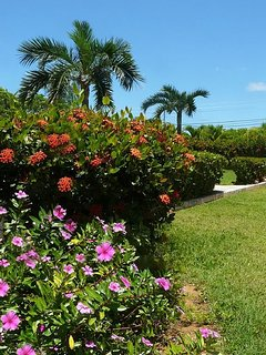 Landscaped grounds on the 2 acre compound.