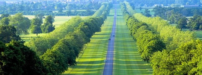 The Royal Mile - Windsor Great Park