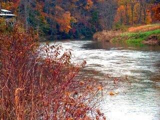 Appalachian Mist in Autumn
